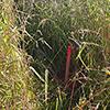 Grenze für Zaunbau